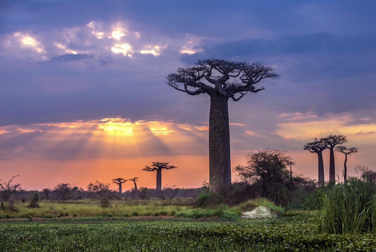 Madagaskar - Zemlja lemura i baobaba