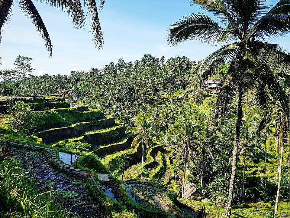 Bali & Kuala Lumpur - Nova godina