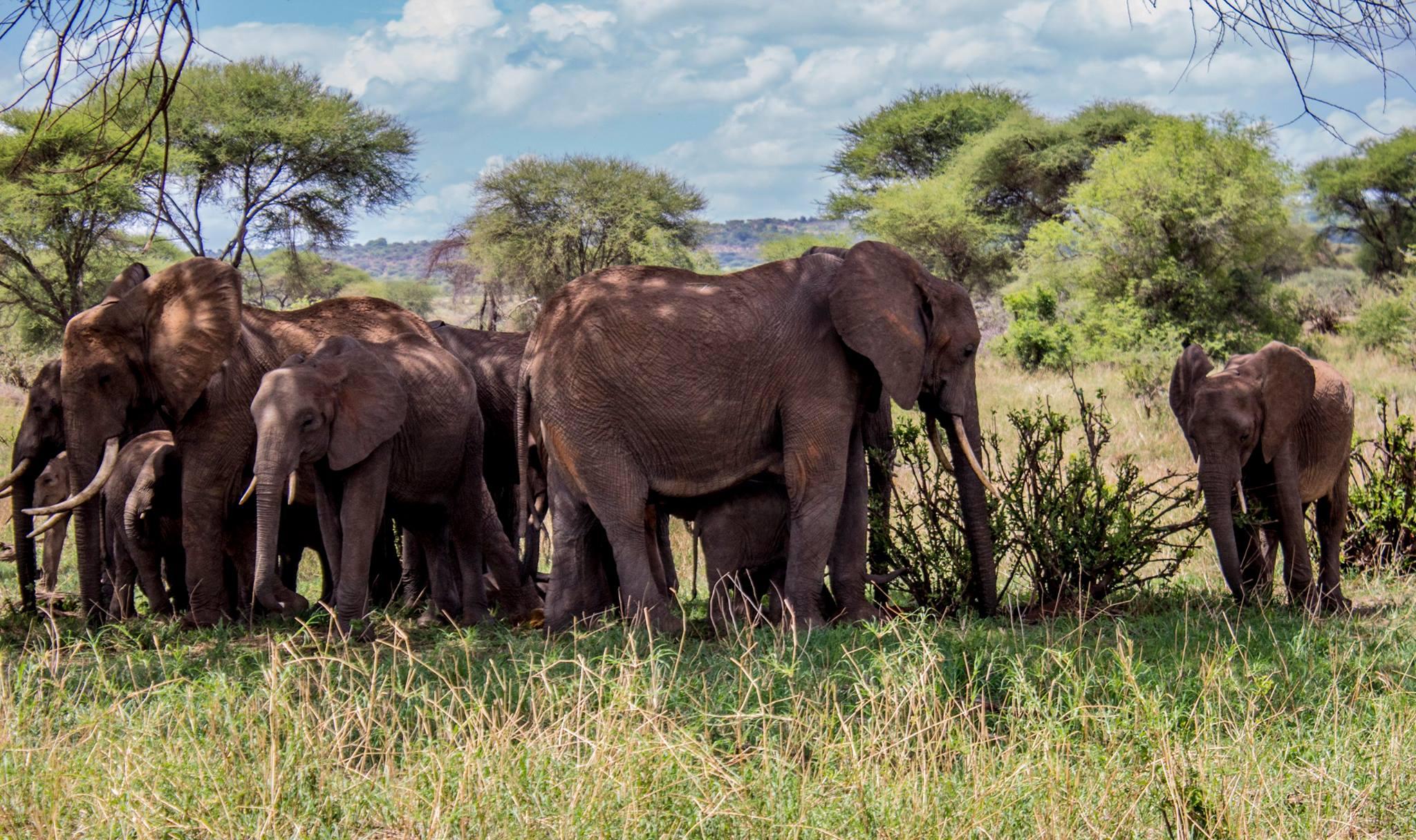 Tanzanija & Zanzibar - Biseri Afrike